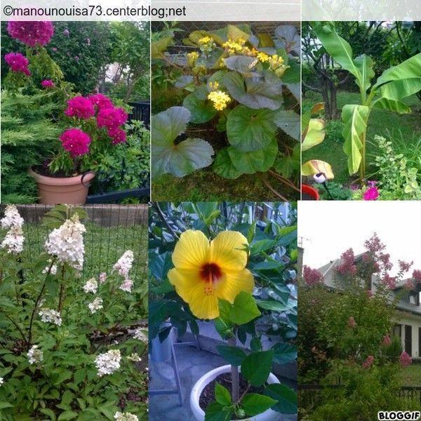 Les fleurs au jardin for Fleurs au jardin